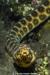 what are you looking for?.........